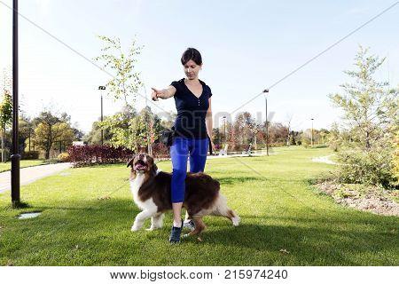 Dog Training Professional Handler Outdoor Teaching Australian Shepherd