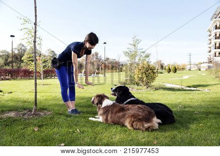 Two Dogs Laying Obey Training Outdoors Park