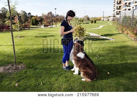 Two Dogs Sitting Training Handler Park Outdoors