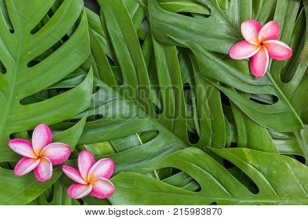 Tropical Top View Summer Botanical Concept Still Life Coffee Cup Notebook Frame With Plumeria Frangi
