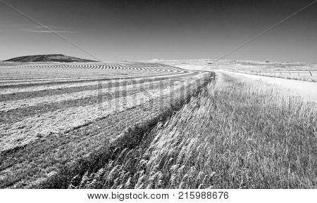 Alfalfa Field in the Pryor Mountains in Montana USA - black and white