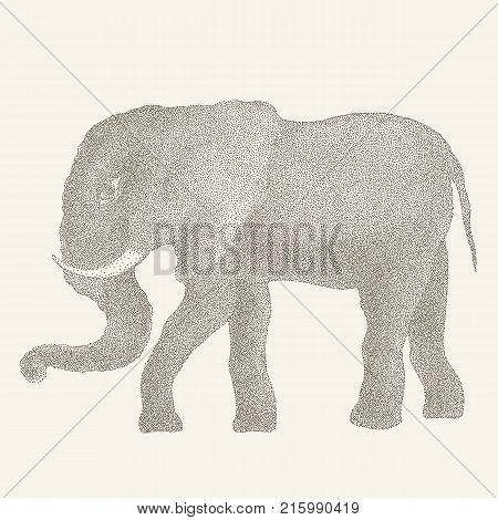 Elephant. Hand drawn Vector illustration, Vintage style