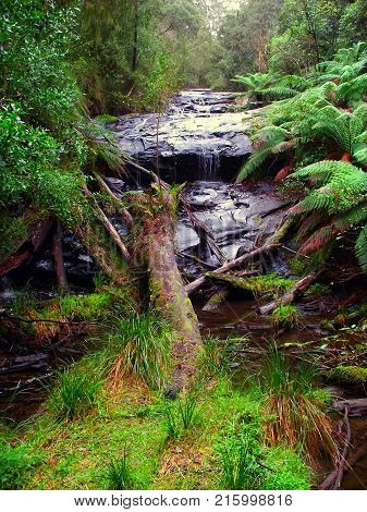 Rainforest cascade in the Great Otway National Park of southern Victoria Australia