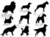 Dogs silhouette to represent different dog breeds poster