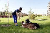 Two Dogs Laying Obey Training Outdoors Park poster
