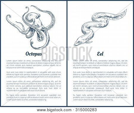 Eel And Octopus Hand Drawn Vector Illustration. Hand Drawn Decorative Icons Of Seafood Set Brochure