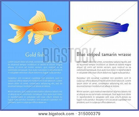 Gold Fish And Blue Striped Tamarin Wrasse Icons. Freshwater Aquarium Pets On Blue And White Color Ba