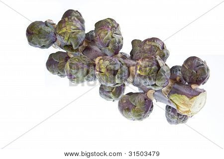 Red Sprouts