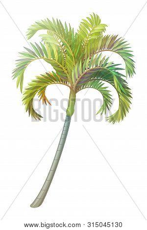 Vector Hand Drawn Plant Clip Art Betel Palm Tree