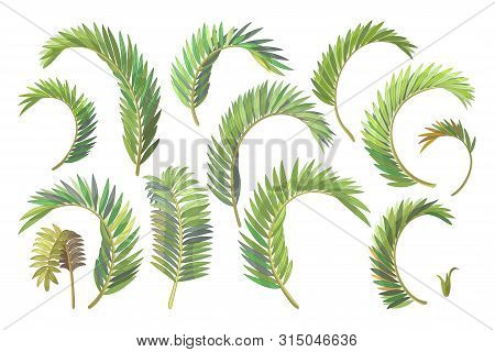 Vector Handdrawn Plant Clipart Betel Palm Leaves