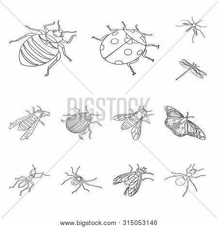 Isolated Object Of Fauna And Entomology Symbol. Collection Of Fauna And Animal Stock Vector Illustra