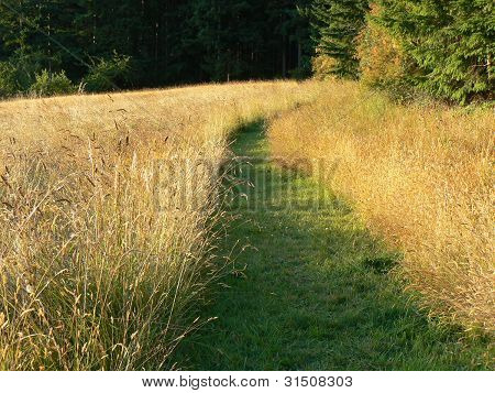 Path through field to woods