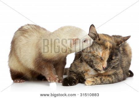 Cat And Ferret Play