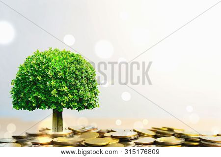 Plant Growing In Savings Coins Stack. Pension Fund, Passive Income. Savings And Making Money. Invest