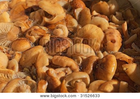 Mushrooms In Boiling Water