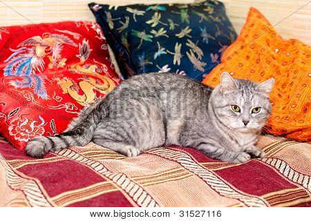 A grey tabby cat lying on a carpet poster