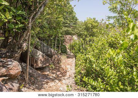 Walking Path In Green Forest In Saychelles