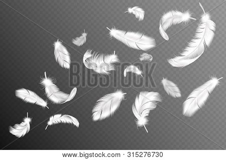 Flying Feathers. Falling Twirled Fluffy Realistic White Swan, Dove Or Angel Wings Feather Flow, Soft