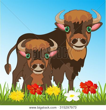 Bison With Its Small Child By Bison On Nature