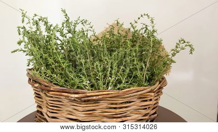 Thyme Is A Mediterranean Herb With Dietary, Medicinal, And Ornamental Uses. The Flowers, Leaves, And