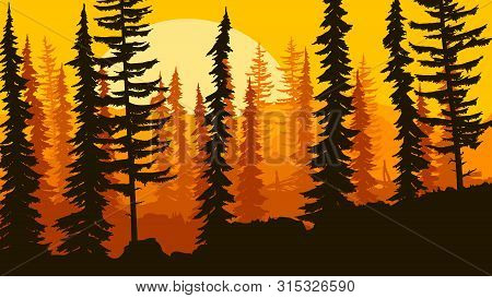 Horizontal Illustration Coniferous Forest Of Freestanding Spruce On Hills.
