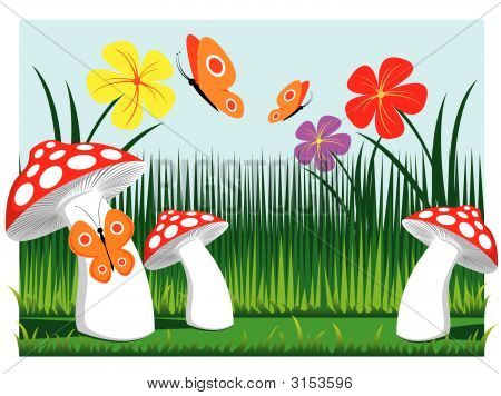 Meadow Mushrooms