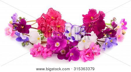 Saintpaulia African Violets Isolated On White Background.