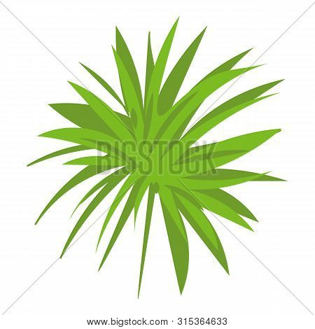 Papyrus Frond Icon. Cartoon Of Papyrus Frond Vector Icon For Web Design Isolated On White Background