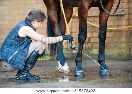 Young Teenage Girl Equestrian Washing Hoofs And Legs Of Horse In Shower After Training. Vibrant Mult