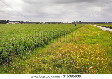 Scarecrow In A Agricultural Field With Pink Flowering Clover. The Photo Was Taken On A Cloudy Day In