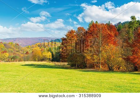 Trees In Red Foliage On The Green Meadow. Beautiful Autumn Landscape Of Mountainous Countryside. Sun