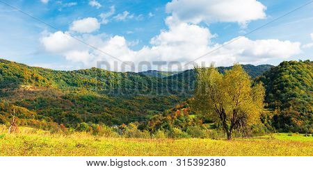 Tree In Yellow Foliage On The Meadow. Beautiful Countryside Panoramic Landscape On A Sunny Day With