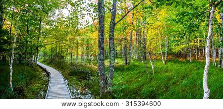 Wooden Footpath Through The Fall Foliage Of Jesup Trail In Acadia National Park
