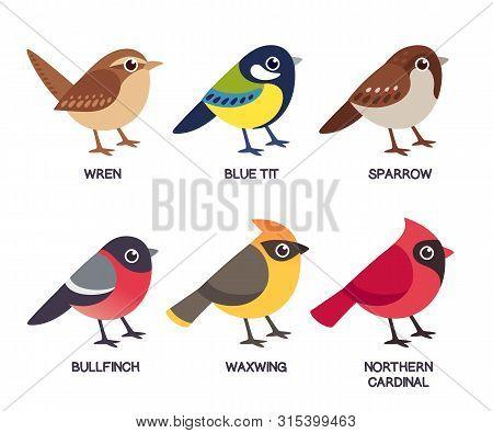 Set Of Cute Cartoon Small Birds: Cedar Waxwing, Northern Cardinal, Common Sparrow, Wren, Blue Tit An