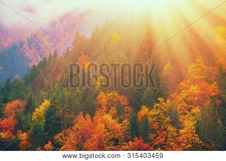 Fall Forest In Mountains. Autumn Nature Landscape Background. Sunshine In Forest Scenery View. Natur