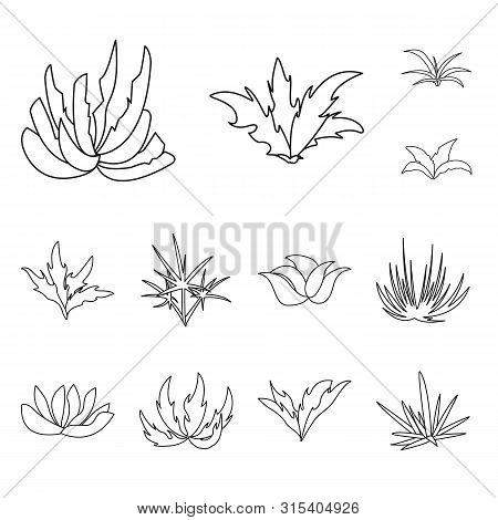 Vector Illustration Of Hedge And Shrub Sign. Collection Of Hedge And Floral Stock Vector Illustratio