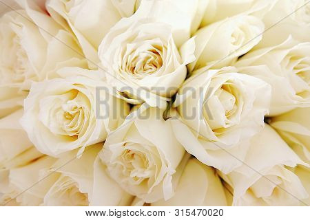 Beautiful White Roses Love Day Wedding Day White Roses Floral Background Flowers Closeup Texture Of