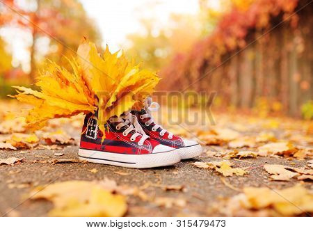 Red Sneakers With Yellow Maple Leaves Inserted In Them Close-up On The Background Of The Autumn Park