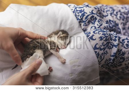 Detail of female hands massaging orphan kittens belly to stimulate its bowel movements as a simulation of mother cat's licking in order to stimulate urination and defecation poster