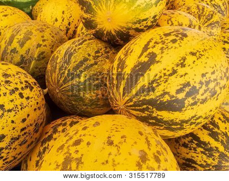 Fresh Yellow And Green Striped Melons Piled On The Market Counter
