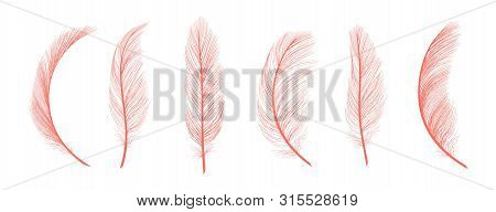 Trendy Coral Feathers. Vector Pink Fallen Feathers Isolated On White Background. Exotic Feather Bird
