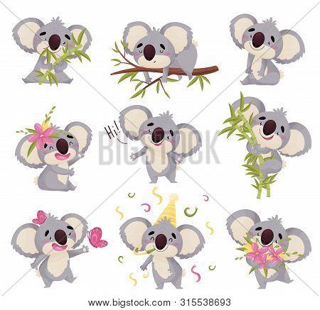 Set Of Images Of Koalas. Vector Illustration On White Background.
