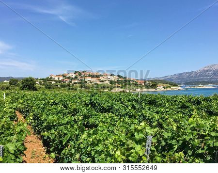A View Of A Sprawling Wine Vineyard Growing The Local Grk Grapes With The Small Town Of Lumbarda And