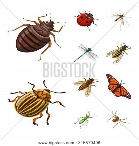 Isolated Object Of Insect And Fly Logo. Collection Of Insect And Entomology Stock Vector Illustratio