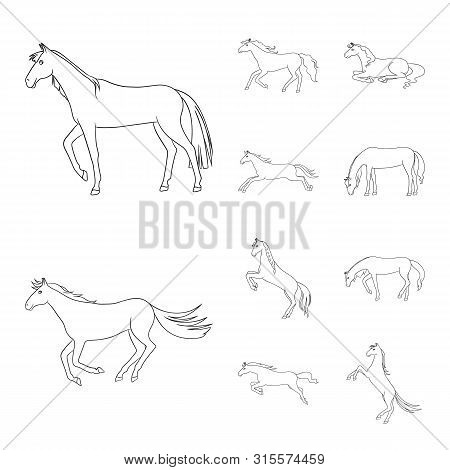 Isolated Object Of Stallion And Galloping Logo. Set Of Stallion And Riding Stock Symbol For Web.