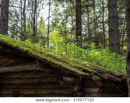 The Roof Of Old Desolate Hunting Hut Overgrown With Grass And Moss