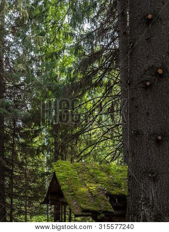 Spruces Trunks And Roof Of Old Desolate Hunting Hut In Summer Forest