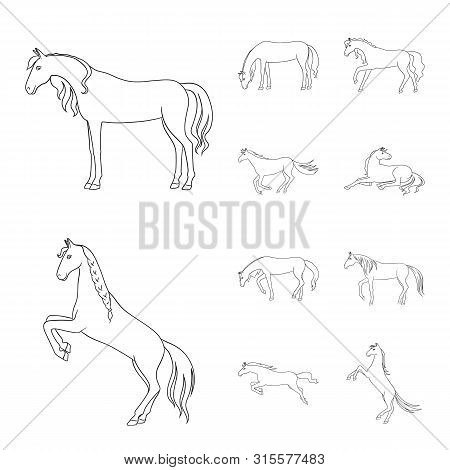 Vector Illustration Of Stallion And Galloping Sign. Set Of Stallion And Riding Vector Icon For Stock