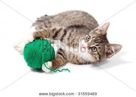 Cute Young Cat