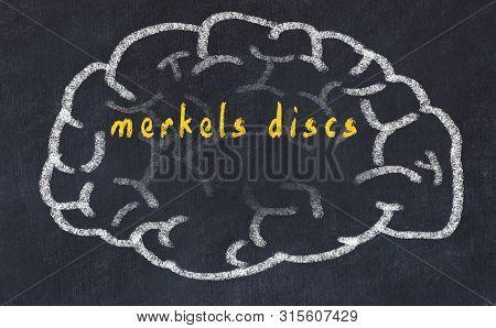 Drawind Of Human Brain On Chalkboard With Inscription Merkels Discs.